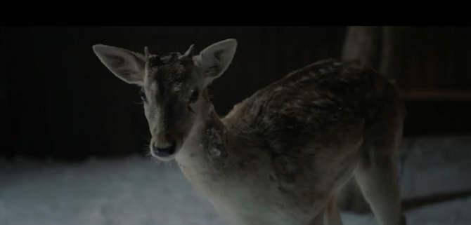 Slika malog jelena